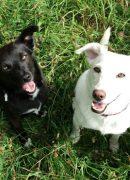 Tiergestütze Pädagogik mit ausgebildeten Helfern auf 4 Pfoten: Besuchshündin Lolle und Therapiebegleithündin Flocke